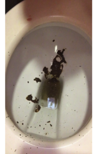 Diarrhea Explosion at the Shopping Center Toilet - Mobile Version (Full HD)