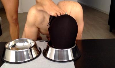 Doggo Breakfast